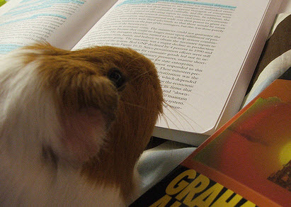 This guinea pig knows his way around the LiveDocs